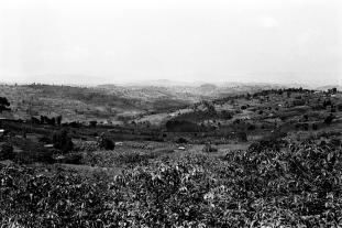Les collines autour de Kamonyi.