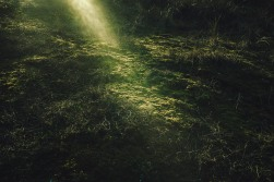 « La lueur » La barre de Monts, janvier 2021.